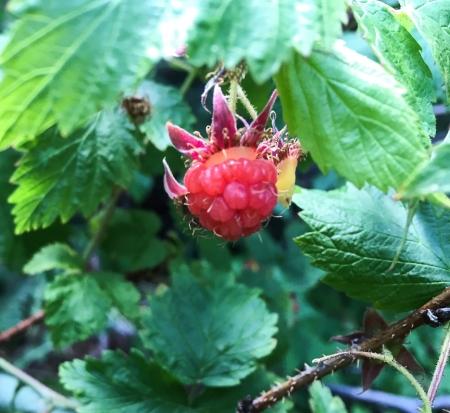 RaspberryLittle