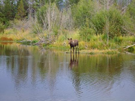 Moose9